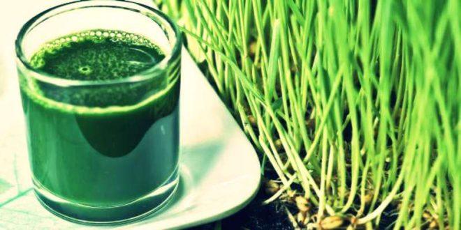 Wheatgrass Juice Benefits in hindi