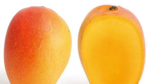 Types of Mango: Many Kinds of Mangoes