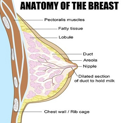 What is a blocked duct during breastfeeding