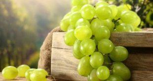 अंगूर खाने से दूर होती हैं कई गंभीर बीमारियां, जानें अंगूर खाने के फायदे