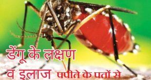 डेंगू के इलाज में बहुत लाभदायक है पपीते के पत्तों का रस जानें कैसे करें इसका सेवन