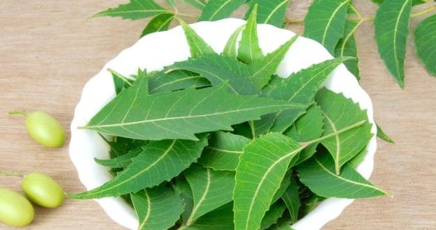 Health Benefits of Neem Indian Lilac