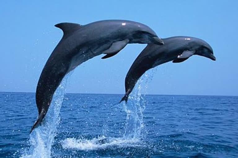 Sapne me Dolphin ko Dekhna